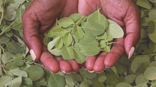 11018_Cutting Through the Hype- Moringa May Be the Next Miracle Maker_v1