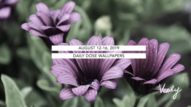 Daily Dose Wallpapers promo