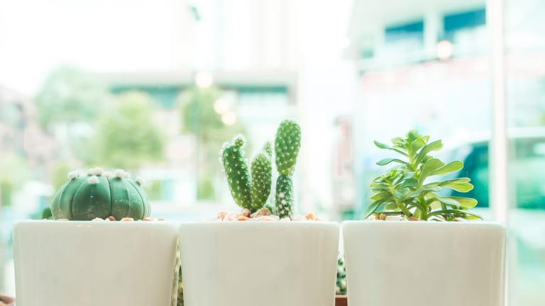 3 Mistakes to Avoid When Growing an Indoor Garden