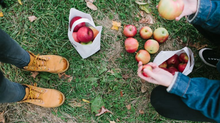The Bizarre Psychological Reasons Why We Love Apple Picking