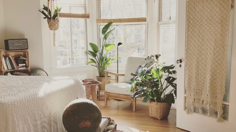 Easy Houseplants for the Woman-on-the-Go
