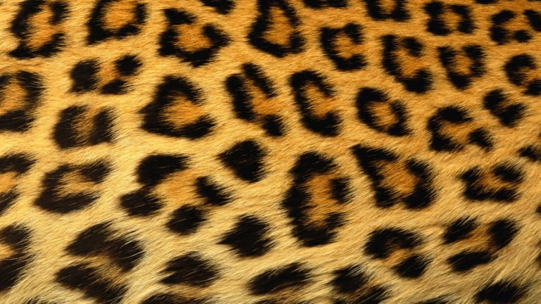 The New Neutral: How to Incorporate Leopard Print into Your Wardrobe