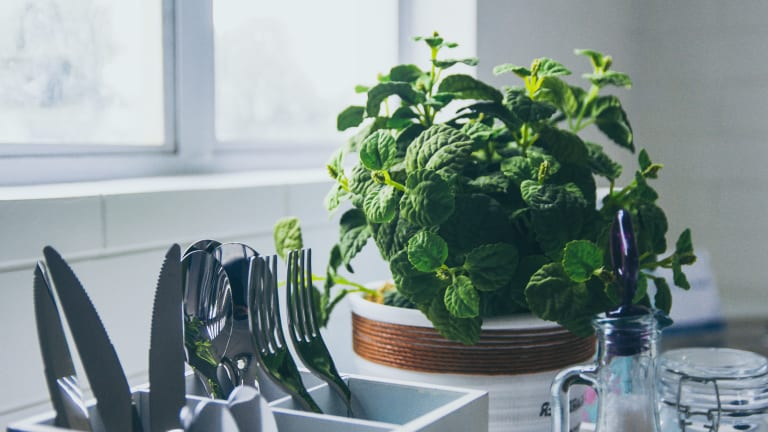 At Home with Her: The Incomparable Lushness of a Window Herb Garden