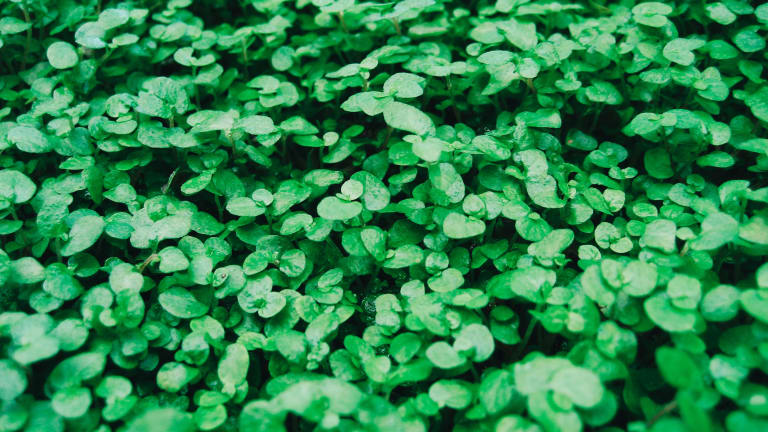 Playlist: Keeping the St. Patrick's Day Spirit Alive