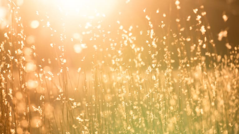 Why the 'Sunshine Vitamin' Is So Important to Our Mental Health