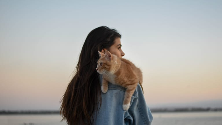 What My Cat Is Teaching Me About Relationships