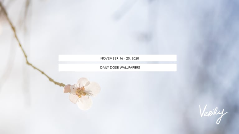 November 16-20, 2020 Daily Dose Wallpapers