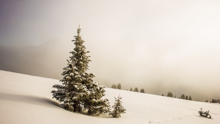 """""""In Winter All the Singing Is in the Tops of the Trees"""": Poems for Christmas"""