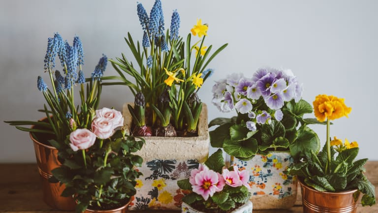 Bringing the Spirit of Springtime to Work