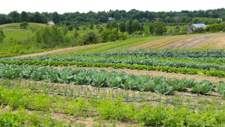 Woman at Work: Farming As a Feminine Profession