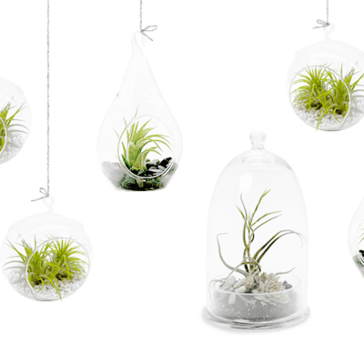 4 Simple Steps To Making Your Own Diy Terrarium Verily