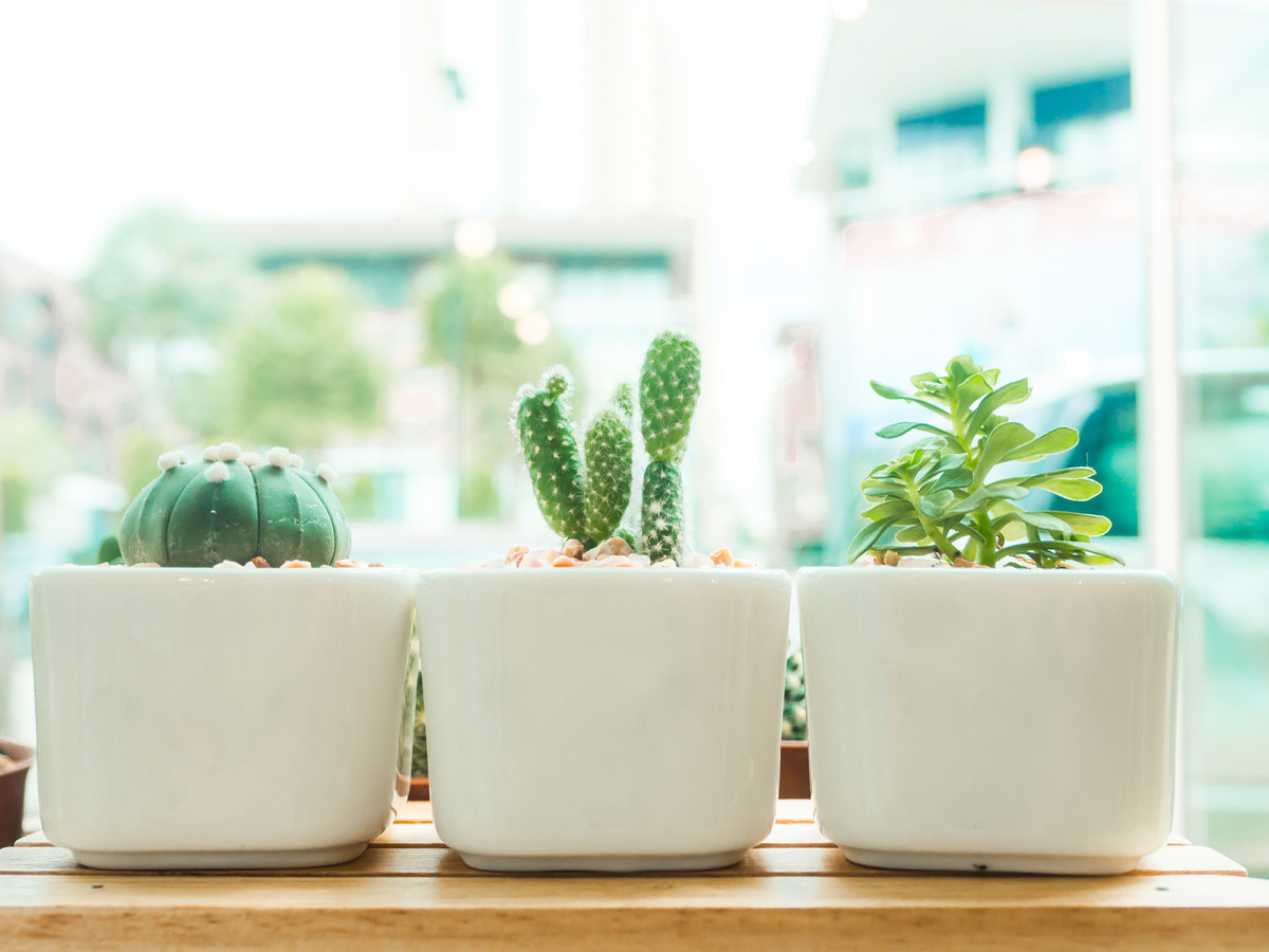 3 mistakes to avoid when growing an indoor garden verily