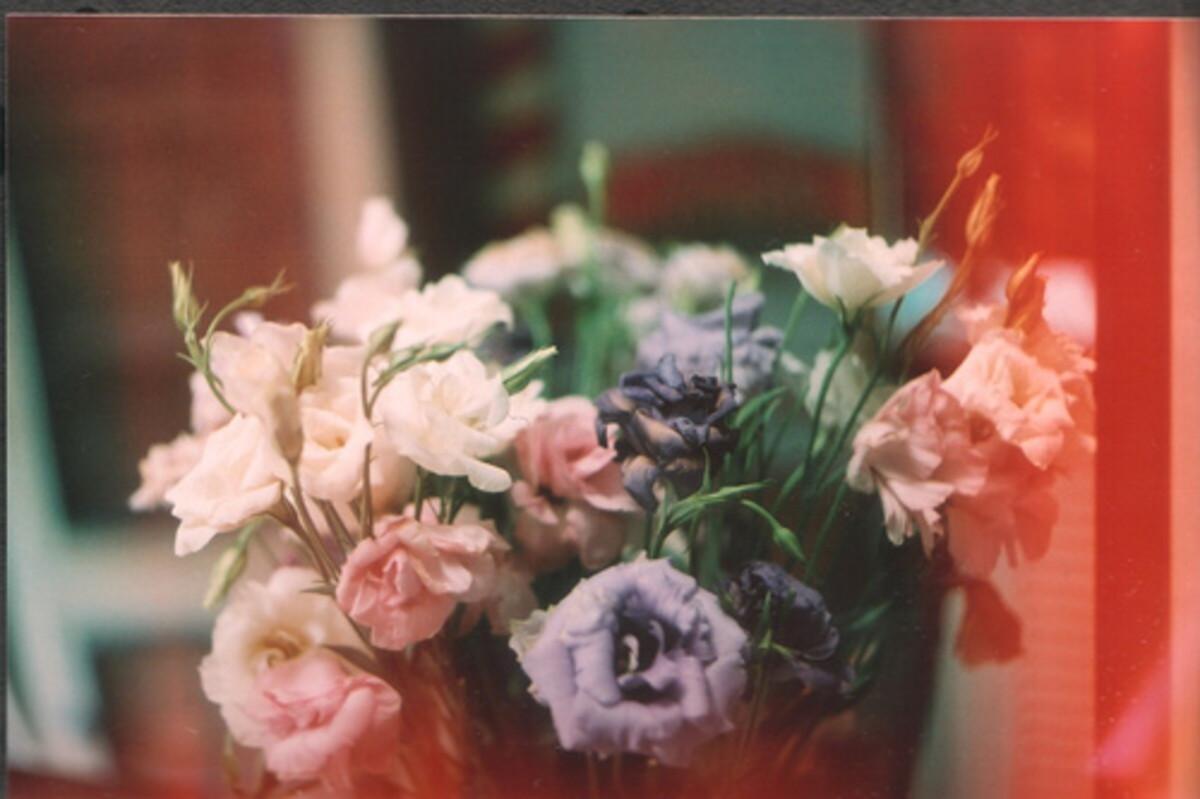 Verily-blog.-Vday