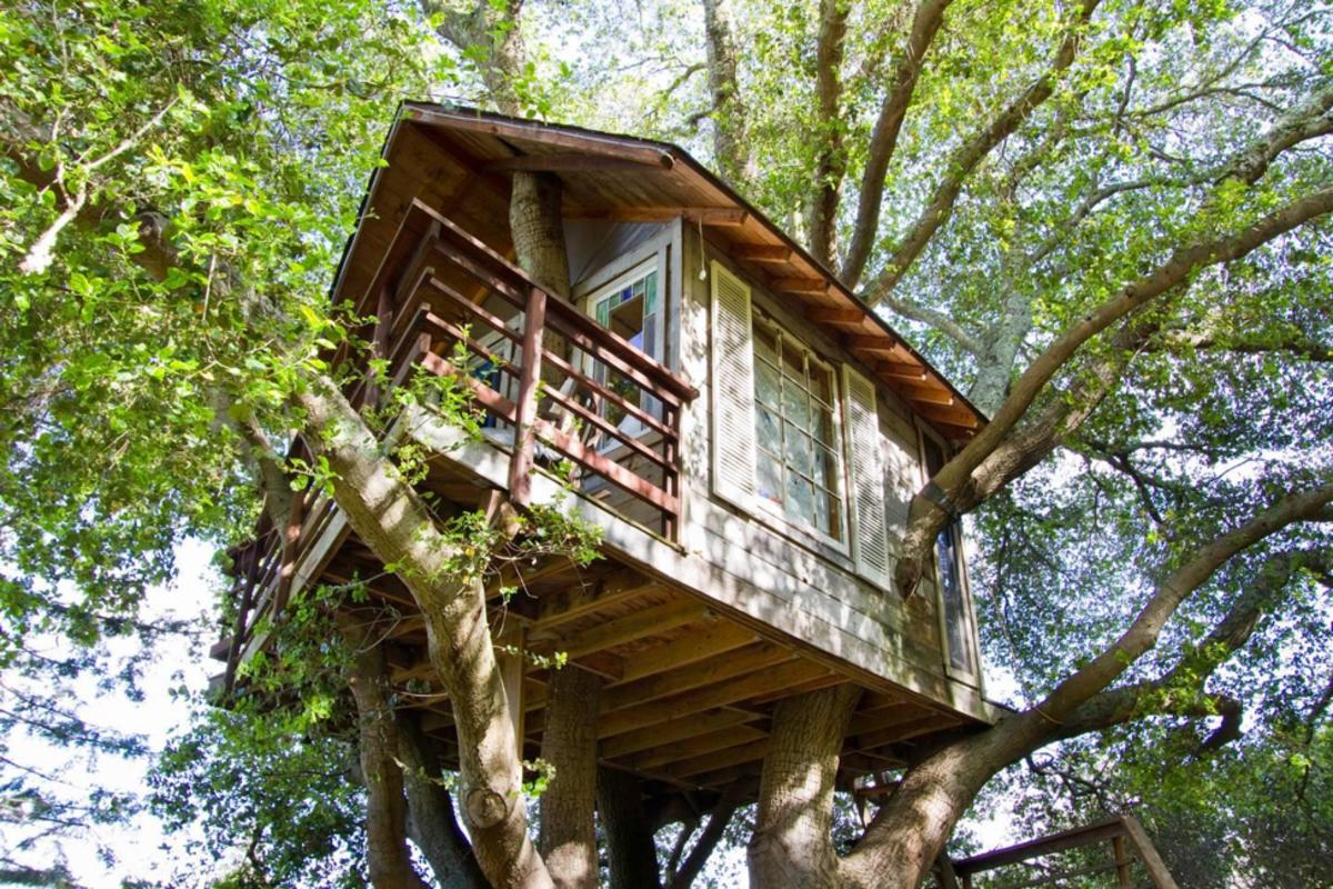 TreehouseAboveTheBay